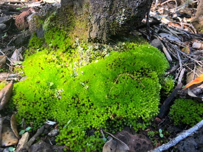 Moss and tiny mushrooms